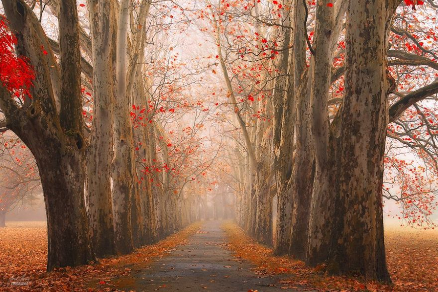 fantastic autumn forests 4