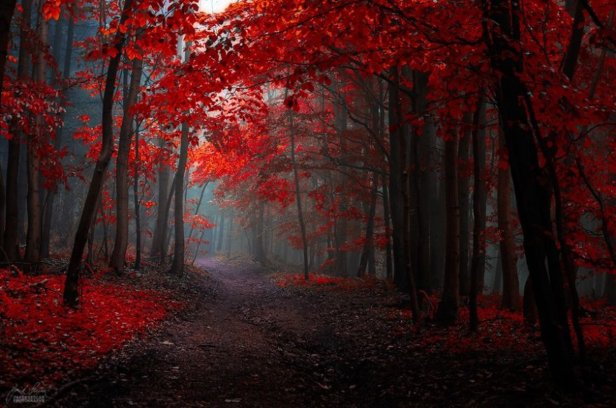 fantastic autumn forests 5