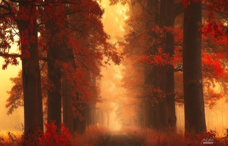 fantastic autumn forests 6