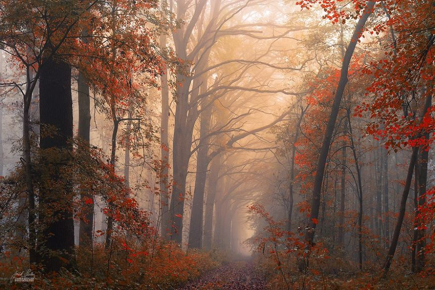 fantastic autumn forests 7