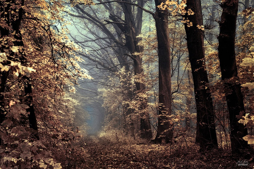 fantastic autumn forests 8