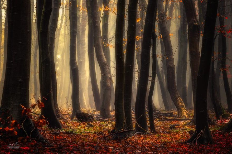 fantastic autumn forests 9