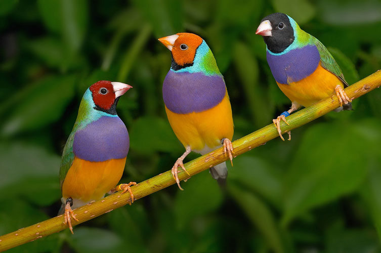 10 World's most colourful tropical birds