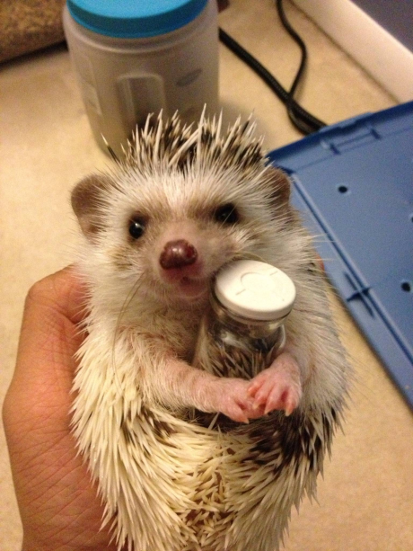 3. You can entertain your hedgehog easily