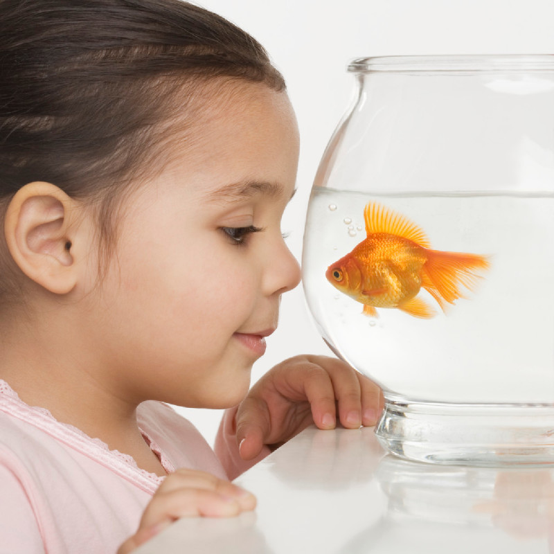 8 reasons why a fish is a good pet