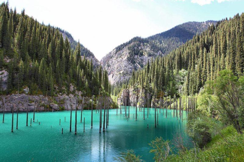 Underwater forest in Lake Kaindy