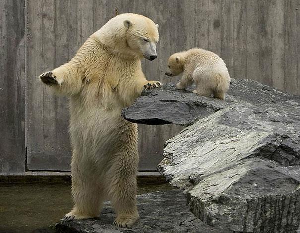 Cute bears acting like humans
