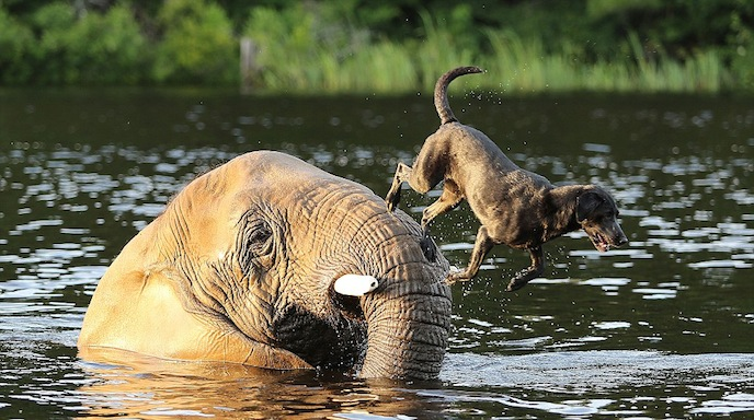 Animals playing and swimming in water
