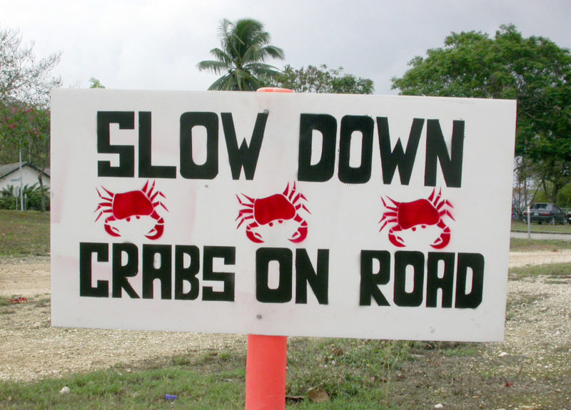 Famous World event: The Red Crab Migration