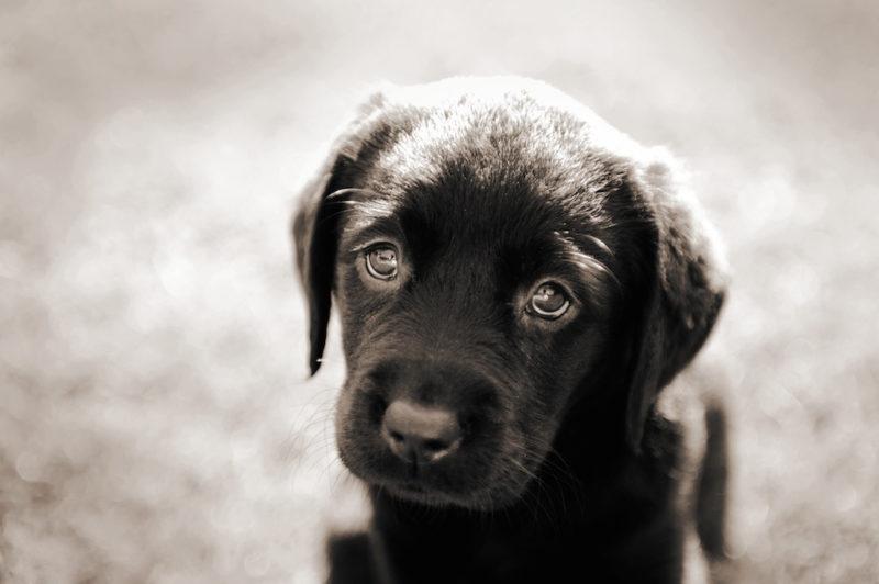 Animals with amazing eyes