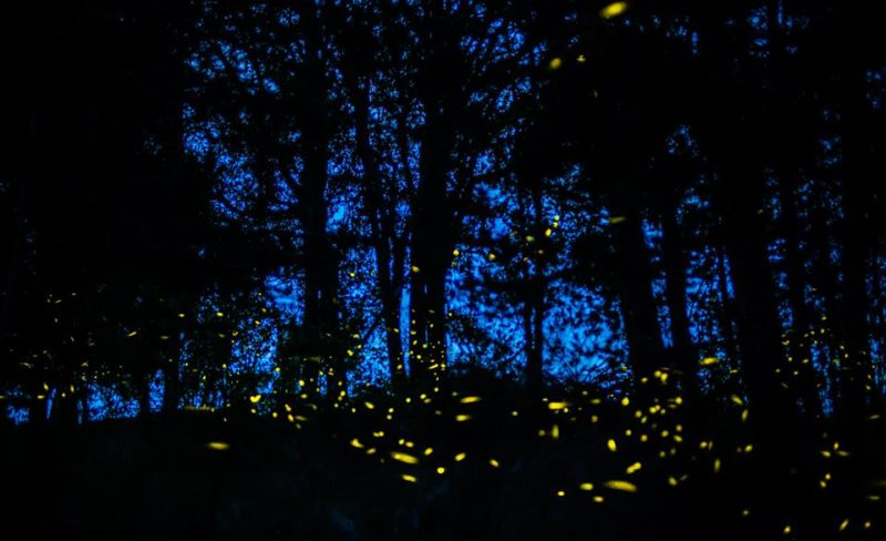 Firefly sanctuary in Tlaxcala, Mexico