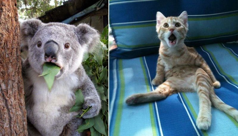 The cutest surprised animal faces