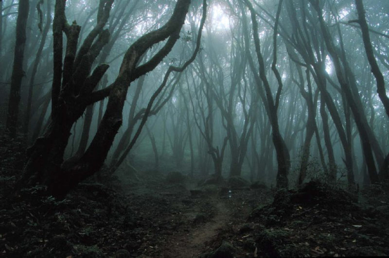 The haunted forest Aokigahara in Japan