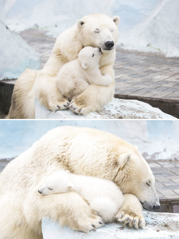 Cute mama bears and their little teddies