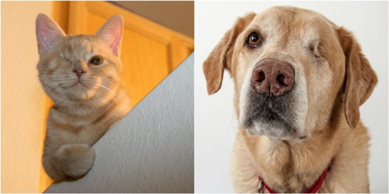 Beautiful one eyed cats & dogs