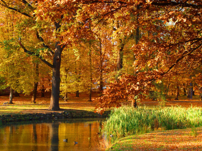 The golden autumn in Poland