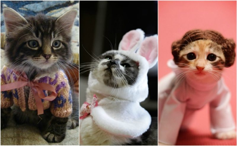 Dressed up kittens that will make you smile!