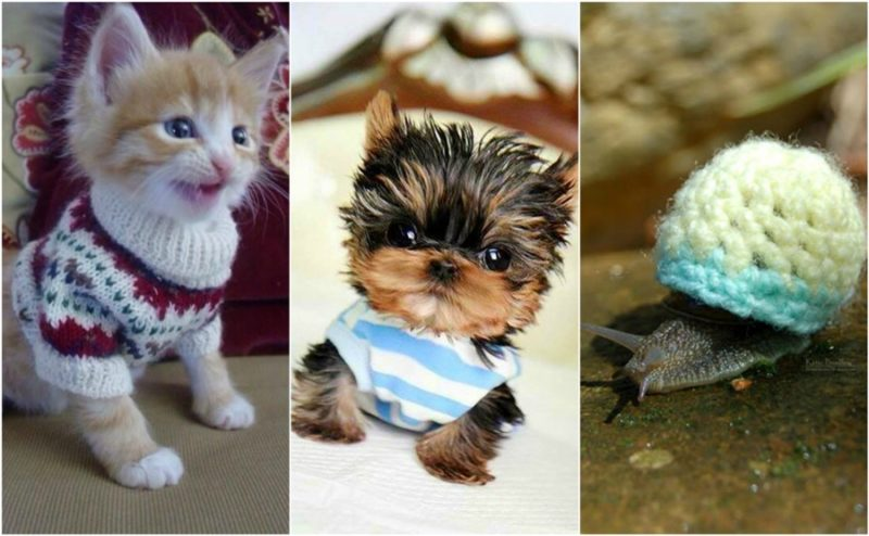 The cutest tiny animals in tiny clothes