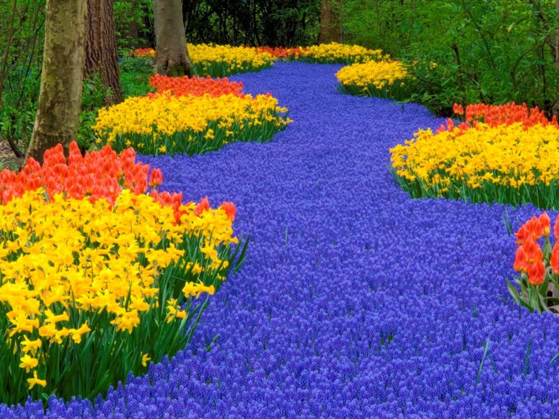 Keukenhof, the most colorful garden on Earth