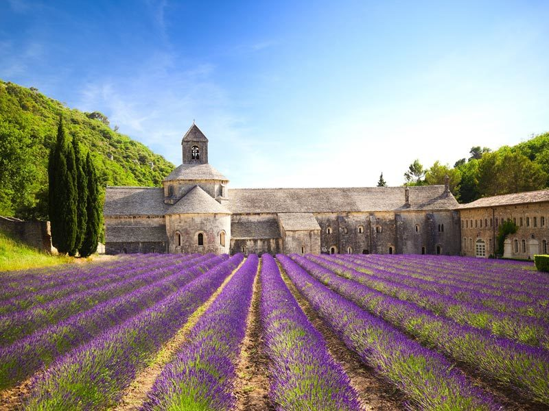 Sénanque Abbey, the abbey with lavender fields