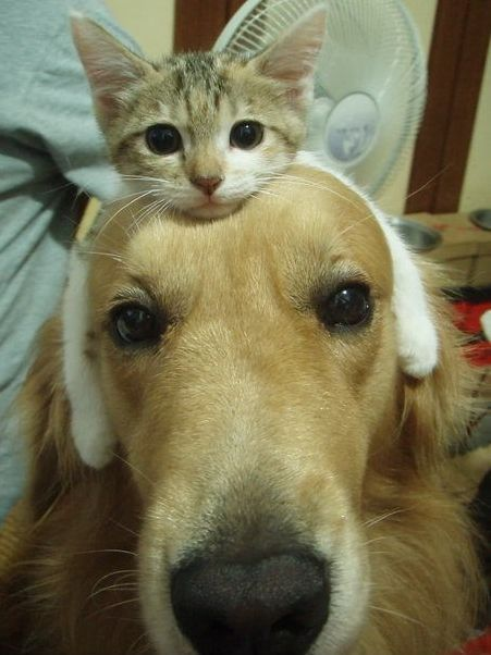 Who says that dogs and cats can't hang out?