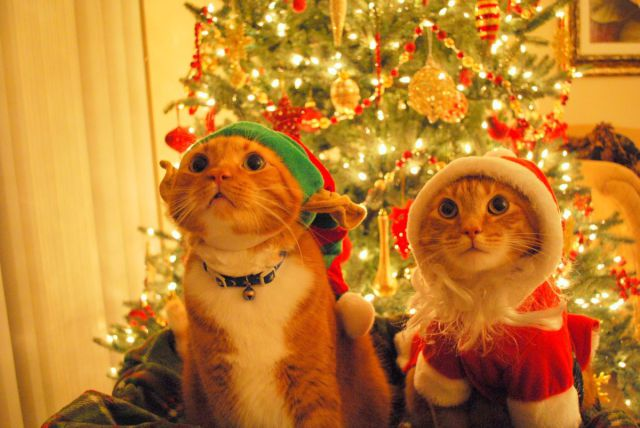 Animals celebrating Christmas