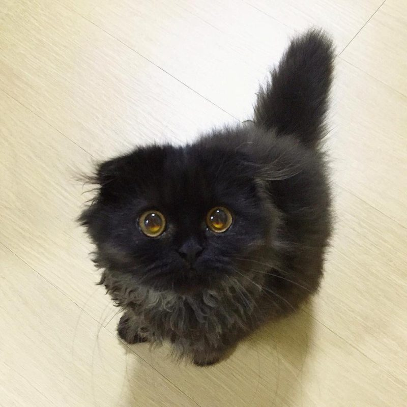 Meet Gimo, the cat with most adorable eyes
