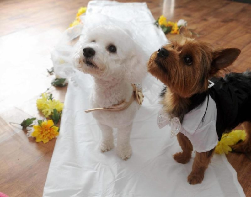 Animals getting married. Part 2