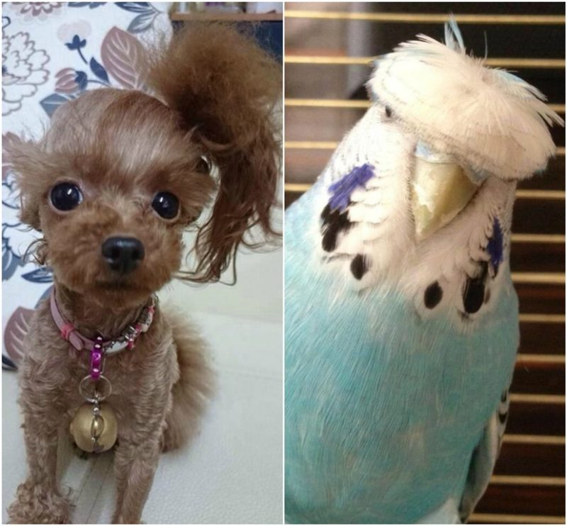 Animals with funny hairstyles