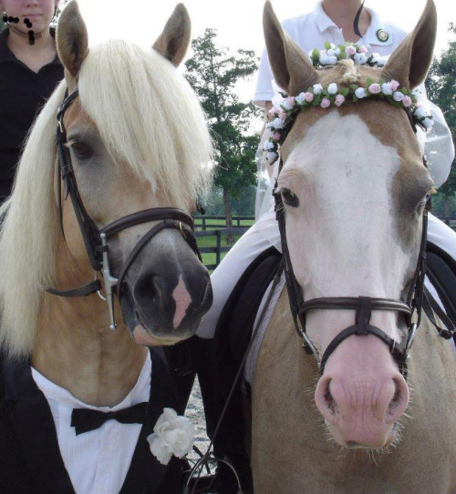 Who said that animals can't get married?