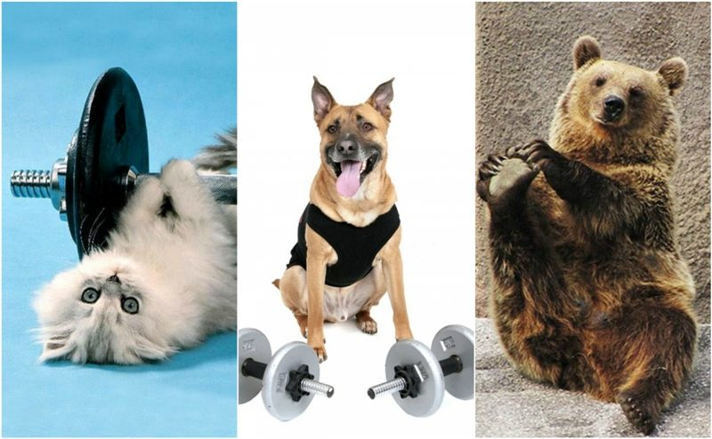 Animals exercising