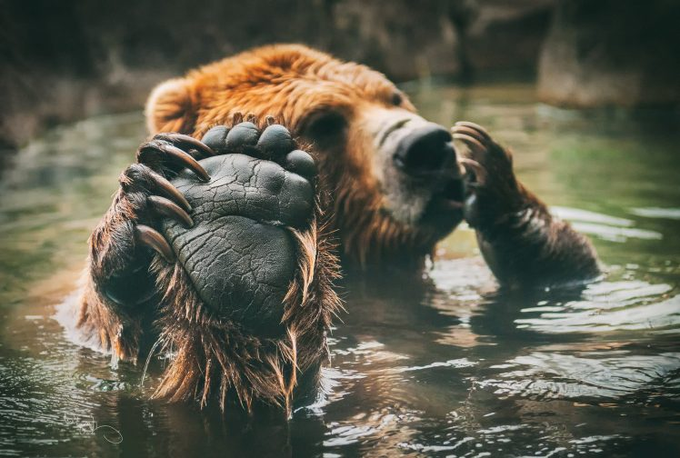 Cute bears enjoying the water