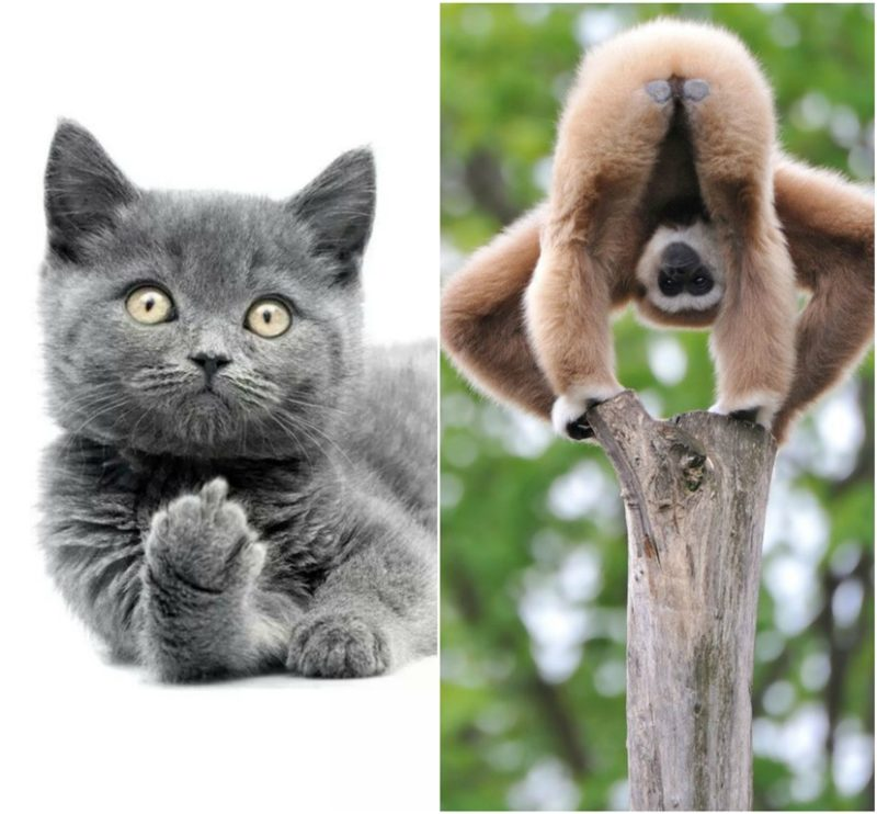 Animals doing inappropriate things