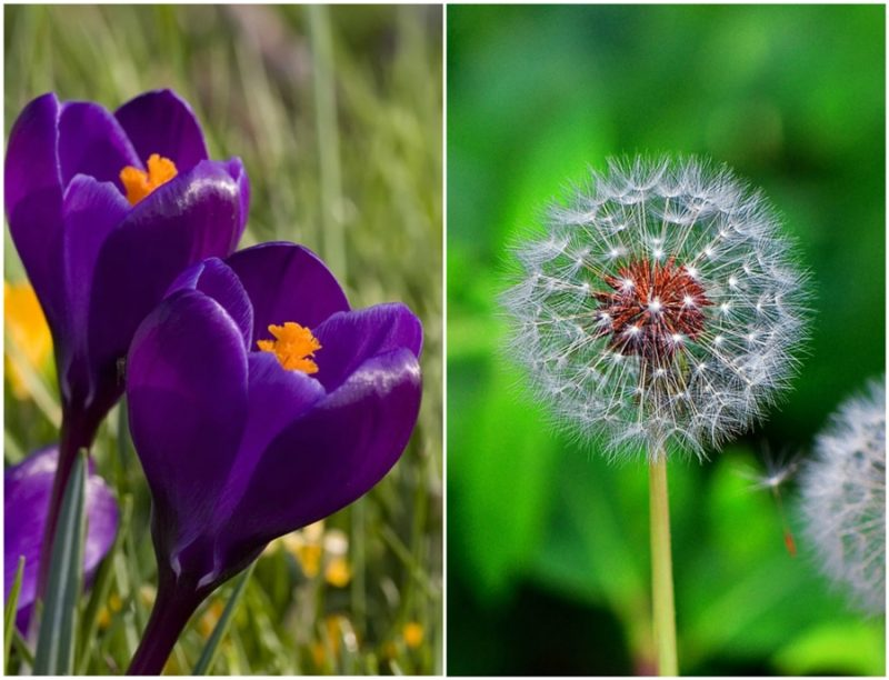 17 Cool facts you didn't know about flowers