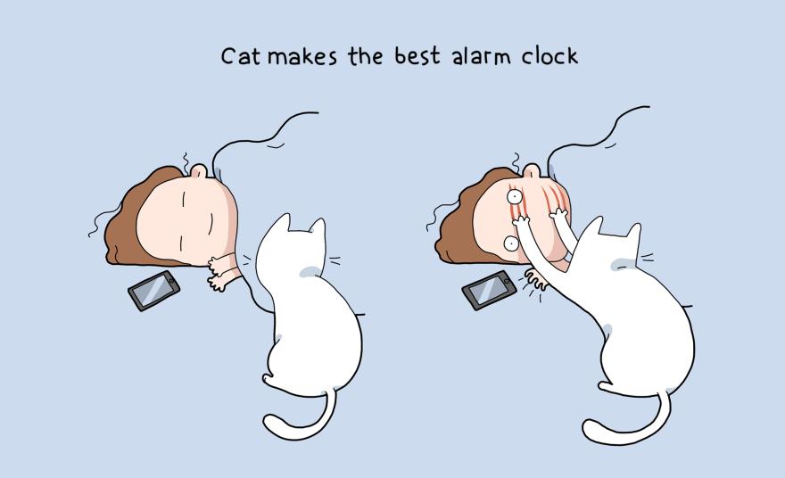 10 advantages of having a cat
